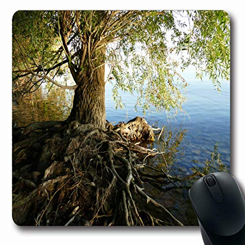 Ahawoso Mousepads Growing Brown Forest Old Tree Roots Above Ground Tihany Bay Nature Parks Green Soil Balaton Lake Oblong Shape 7.9 x 9.5 Inches Non-Slip Gaming Mouse Pad Rubber Oblong Mat (Best Soil For Bay Trees)