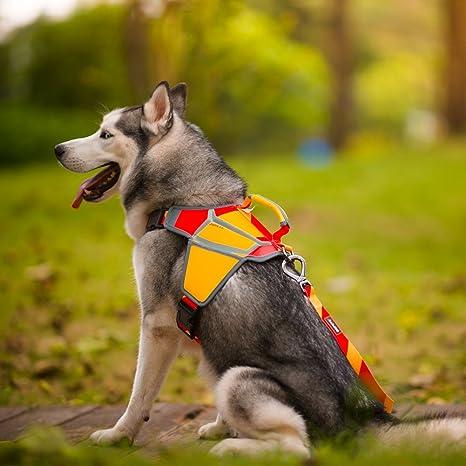 QQPETS Arnés de Perro, No-Pull Pet Harness Ajustable Chaleco para ...