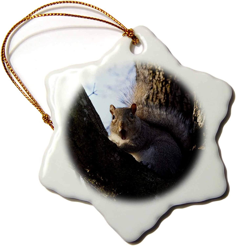 3dRose USA, Oregon, Eastern Gray Squirrel Wildlife - US38 RBR0422 - Rick. - Ornaments (ORN_146014_1)