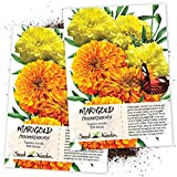 Seed Needs, Crackerjack Marigold (Tagetes erecta) Twin Pack of 500 Seeds Each