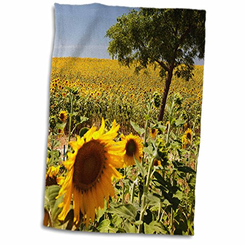3D Rose Spain Andalusia Cadiz Province. Tree in Field of Sunflowers. twl_205429_1 Towel, 15