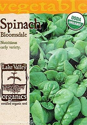 Organic Bloomsdale Longstanding Spinach Seeds - 4 grams