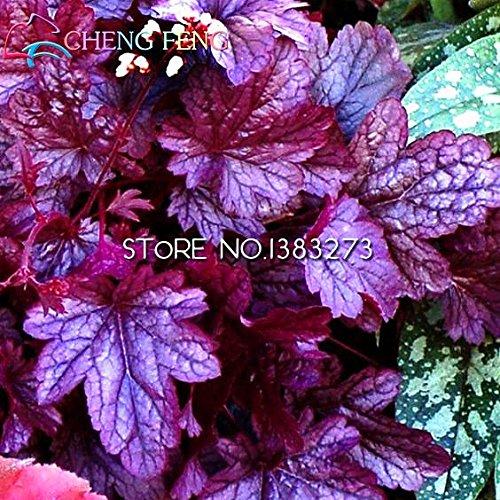 50pcs/lot Heuchera Seed Coral Flower Coral Bells Colorful Leaf Bonsai Plant Diy Home Garden Seeds Beautiful Pot (Flower Pot Corals)