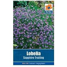 Lobelia Sapphire Trailing by Bulbs and Seeds Direct