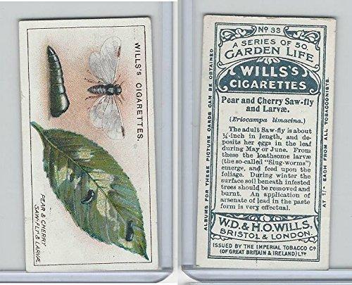 W62-82 Wills, Garden Life, 1914, 33 Pear & Cherry Saw-Fly & -