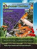 Garden Travels - Lavender - Koi
