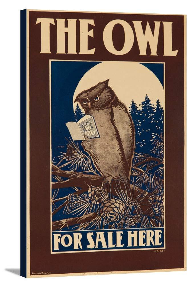 The Owlビンテージポスター(アーティスト:鳥) USA C。1896 21 7/8 x 36 Gallery Canvas LANT-3P-SC-63160-24x36 21 7/8 x 36 Gallery Canvas  B0184B6JPG