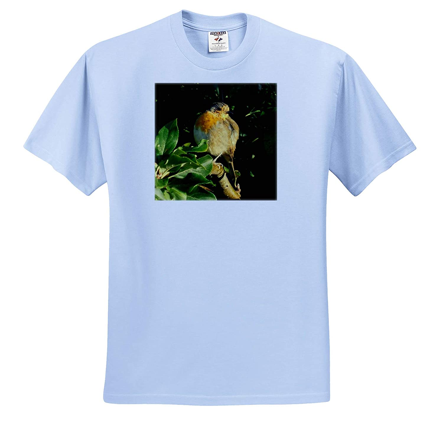 T-Shirts 3dRose Russ Billington Photography Image of English Robin in Late Summer