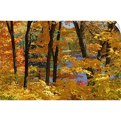 CANVAS ON DEMAND Mike Grandmailson Wall Peel Wall Art Print Entitled Sugar Maples, Gatineau Park, Quebec, Canada 18