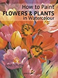 img - for How to Paint Flowers & Plants: in Watercolour book / textbook / text book