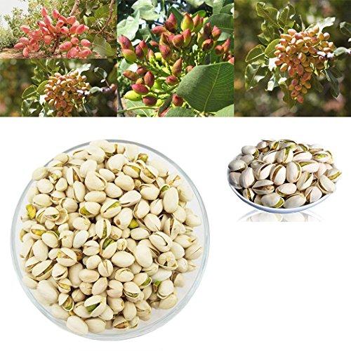 Legros 5 Seeds Pistachio Nut Seeds, Rare Nut Tree Seeds