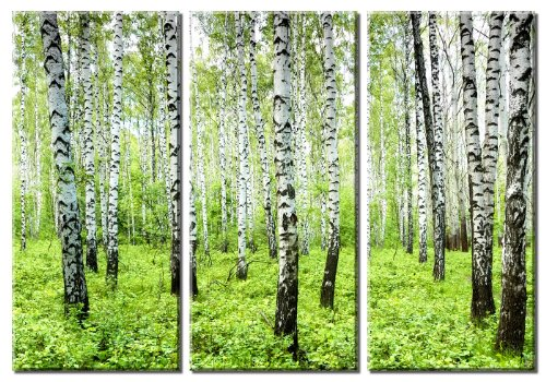 Picture Sensations Framed Huge 3-Panel Spring Tree Birch Forest Giclee Canvas Art