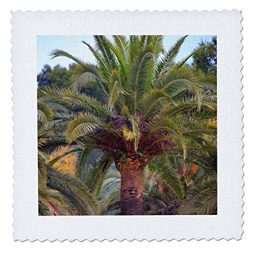 3dRose Danita Delimont - Trees - Palm trees within the grounds of Park Guell, Barcelona, Spain. - 18x18 inch quilt square (qs_257870_7) by 3dRose
