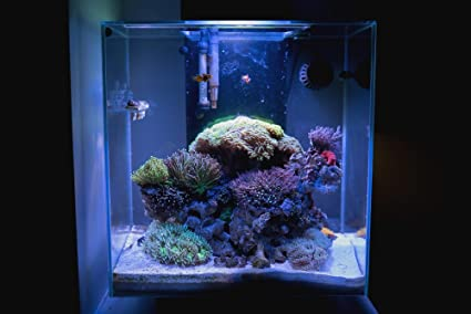 18 watt ultrabrite reef led system for fluval edge