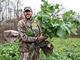 Amazing Whitetail Institute Food Plots
