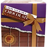 Gift Republic Grow Your Own Chocolate Flowers