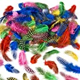 Speckled colored Craft Feathers Assorted colors Children's Art Supplies Collage (Pack of 120) by Baker Ross