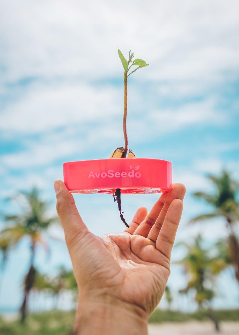 AvoSeedo Bowl Grow your own Avocado Tree (Blue) 763461405370