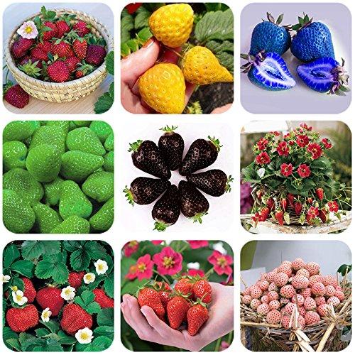 (2018 New Arrivals!! Davitu 9 Packs Strawberry Seeds Organic & Hybrid Edible Roman F1 Yellow Blue Green Black Milan Pikstan F1 White Fragaria - (Color QC386MxT1))
