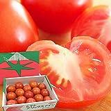 甘味と酸味のバランスが絶妙!プレミアムトマト「おもいろトマト」1箱(約1.0kg) ギフト 贈り物 贈答品 誕生日プレゼント 業務用に【父の日】