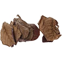Blesiya 10x Premium Grade Catappa Indian Almond Leaves Perfect for Breeding & Hiding