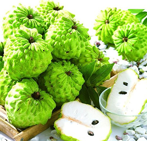 Graviola (Soursop) FRUIT Powder, 100% Natural, Pure Fruit Powder 2.2 lb (10:1 Extract) Annona Muricata Guanabana by Fruit Specialities (Image #6)