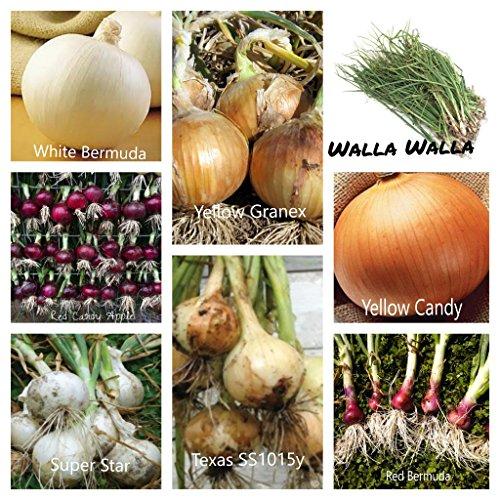 Glamaours Cebolla Plant Mix (30 Plantas), Esta poderosa Mezcla de Ocho consiste en sabores Dulces, Suaves y crujientes