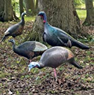 4 Ultimate Turkey Decoys