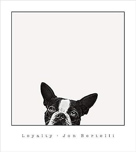 Amazon Com Buyartforless Loyalty Boston Terrier By Jon Bertelli 20x18 Art Print Poster Photograph Dog Head Looking Up Peeking Posters Prints