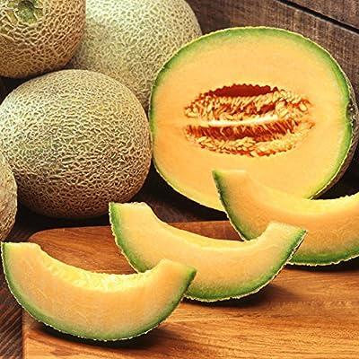 wpOP59NE 20Pcs Cantaloupe Hami Melon Sweet Delicious Fruit Garden Farm Yard Plant Seeds Plant Seeds : Garden & Outdoor