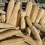 Luffa - éponge végétale 10 graines