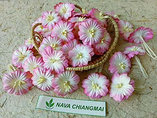 NAVA CHIANGMAI Sakura Cherry Blossom Mulberry Paper Flower (No Wire stem) Craft Flowers, Artificial Flowers, Scrapbook Paper Flowers,Decorative Flowers for Crafts. (Decorative Mulberry Paper Flowers)