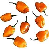 Habanero Orange (Eine der schärfsten Chilis der Welt) 10 Samen