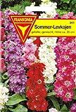 Sommer - Levkojen, Matthiola incana, ca. 200 Samen