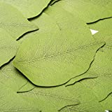 Da Jia 300 Pages Creative Green Tree Leaf Paper Sticky Memo Notes Scratch Pads(50Pages/Set x 6 Sets)