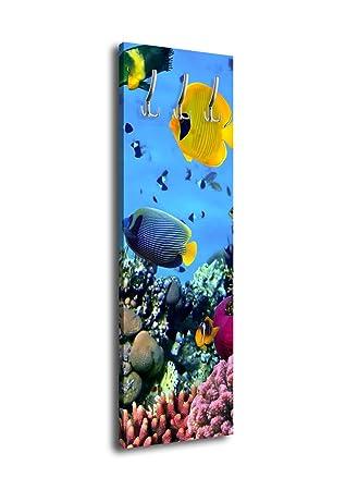 wandmotiv24 Perchero con diseño Peces en el Arrecife de ...