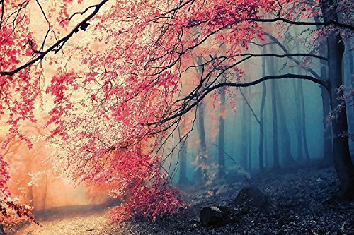 Nature Poster Canvas Art Print - Tree fog nature beautiful