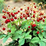 buy Loss Promotion! Wild Strawberry Seeds 50pcs/bag Woodland Strawberry Seeds Fruit Seeds Delicious Fruit Home Garden Bonsai Plant now, new 2018-2017 bestseller, review and Photo, best price $2.83