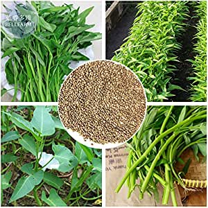 Amazon.com: Venta caliente 2018. Maslin Thai Water Spinach ...
