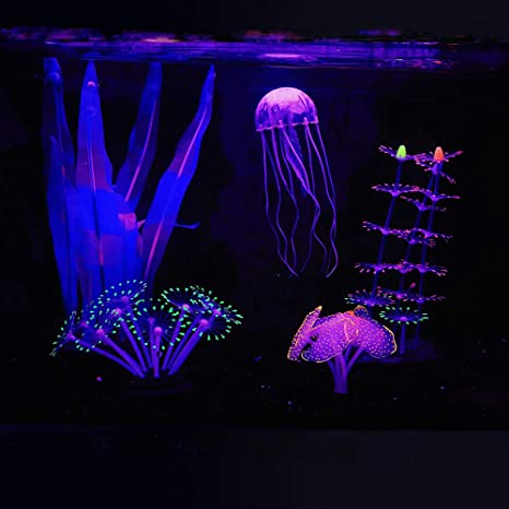 Amazon.com : Bluecoco (5 Pieces) Luminous Aquarium Coral Decorations, Glowing  Fish Decorations for Tank, Fish Tank Plants, Big kelp×1, Sunflower×1,  Anemone×1, Strip Coral Plant×1, Jellyfish×1 : Pet Supplies