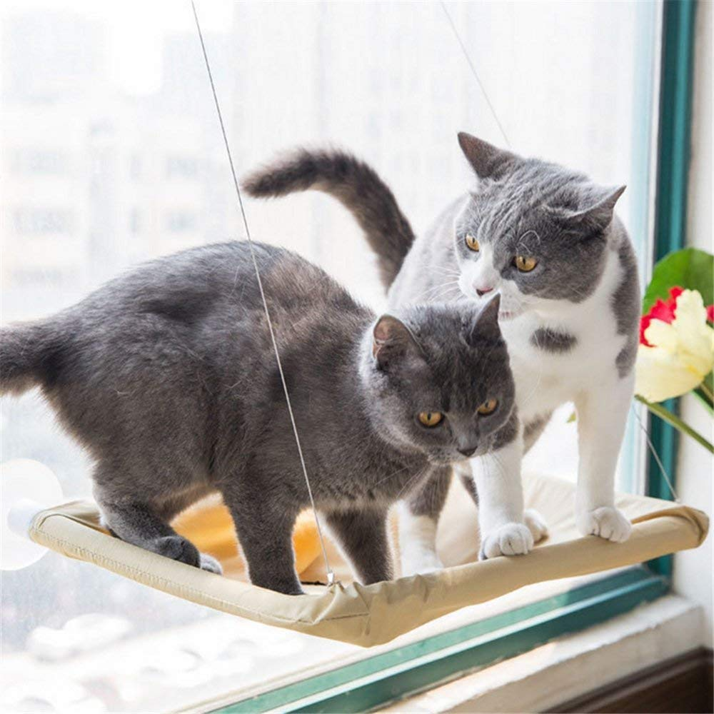 Amazon.com: OthoKing - Percha para ventana de gato, asiento ...
