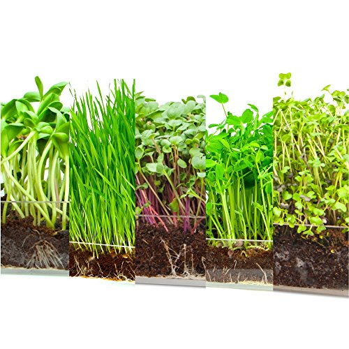 Microgreen Assortment 5 Pack Refill - Pre-measured Soil + Seed,