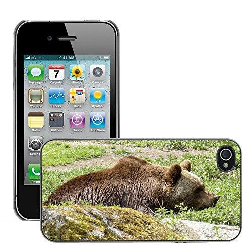 Bild Hart Handy Schwarz Schutz Case Cover Schale Etui // M00134448 Braunbär Mammal Wild Animal // Apple iPhone 4 4S 4G