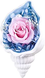 Home Decor Preserved Real Rose with Ceramics Conch Valentine's Gift for Mom Women Her Wife Girlfriend Birthday/Valentine Day/Christmas/Anniversary Eternal Rose, TOJUNE (White)