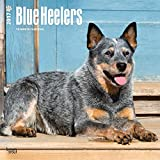 Mother's Day Gift Blue Heelers Dogs Wall Calendar 2017 {jg} Best Gift Ideas - Great for mom, dad, sister, brother, grandparents, , grandchildren, grandma, gay, lgbtq.