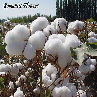 Las semillas del jardín de DIY Planta de algodón blanco Gossypium ...