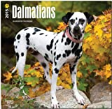 Dalmatians 2015 Square 12x12 (Multilingual Edition)