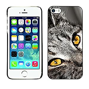 Be Good Phone Accessory // Dura Cáscara cubierta Protectora Caso Carcasa Funda de Protección para Apple Iphone 5 / 5S // Chartreux Serengeti Bengal Shorthair Cat