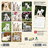 West Highland White Terrier Puppies 2020 7 x 7 Inch