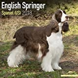 Eng Springer Spaniel (US) Calendar - Dog Breed Calendars - 2017 - 2018 wall Calendars - 16 Month by Avonside